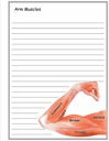 Arm Muscles Notebooking Paper