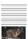 Raccoon Notebooking Paper