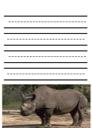 Rhinoceros Notebooking Paper