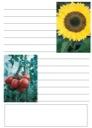 Homeschool Helper Online's Free Summer Notebooking