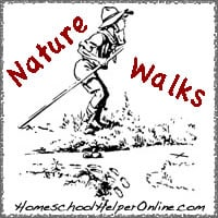 Adding Nature Walks to Your Homeschool