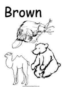 Colors - Brown Worksheet