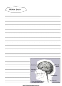 Human Brain Notebooking Page