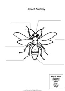 Label the Insect Worksheet