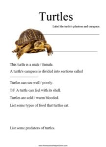 Turtles Worksheet