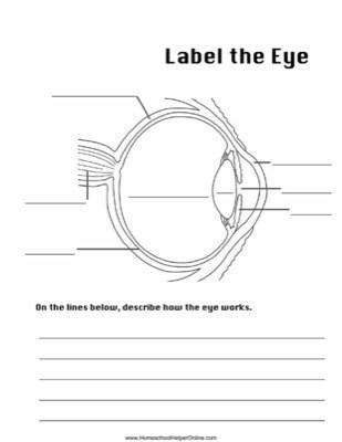 label the eye worksheet - homeschool helper online eye diagram label the 4th grade worksheets printable inner eye diagram label