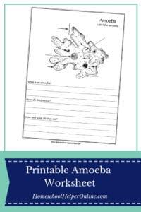 Free printable amoeba worksheet