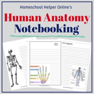 Free printable human anatomy notebooking pages