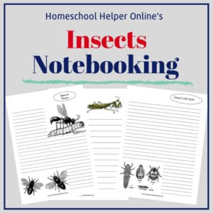 Free printable insects notebooking pages