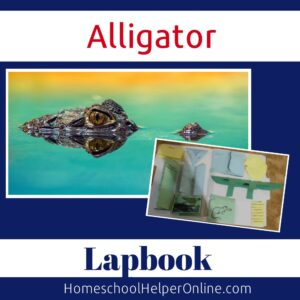 alligator lapbook