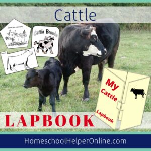 Cow Lapbook