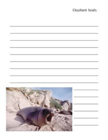 printable notebooking page about elephant seals