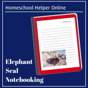 Printable notebooking page for sea elephants