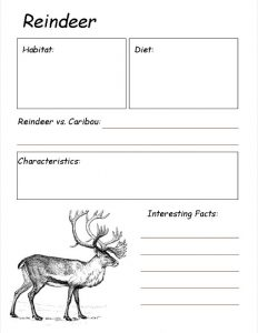Reindeer Notebooking